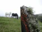 Two horses and a mouldering fencepost in a meadow up the hill behind the lodge.