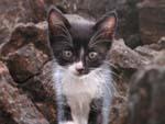 Stray kitten. Awwwww.
