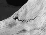 Driftwood on Playa Nosara - closeup