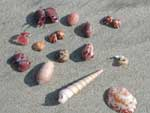 Some shells we picked up along the beach