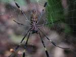 A big spider that had built its web across the path at chest level. We went around!